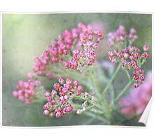 Rice flower tapestry Poster