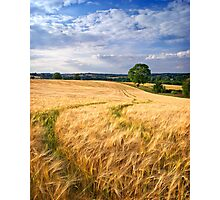 Summer's Bounty, The Cotswolds, England Photographic Print