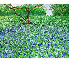 Spring Bloom spread Photographic Print