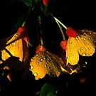 Night Lights 2 by Elfriede Fulda