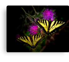 Stick Together ~Swallowtail Butterflies ~ Canvas Print