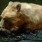 Brown Bear's daily meal  by steppeland