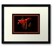 The Tiger Lily Framed Print