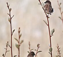 A Lovely Pair by Gretchen Dunham