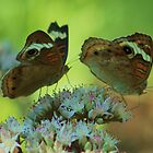 twin butterflies by ANNABEL   S. ALENTON