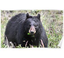 Salad Baaar (American Black Bear) Poster
