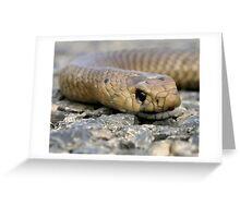 Brown Snake (Demansia textilis) Greeting Card