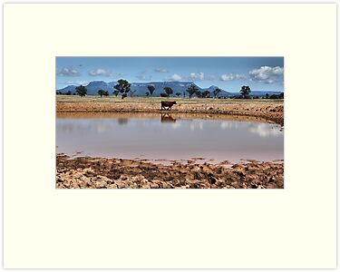 Capertee Billabong - NSW Australia by Bev Woodman