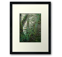 Light Through Leaves Framed Print