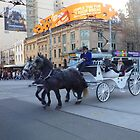 Horse and carriage city tour  by machka