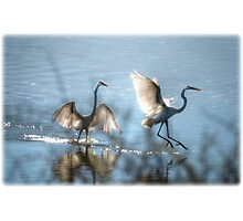 Water Ballet  Photographic Print