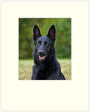 Black German Shepherd by Sandy Keeton