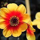 Eden Project flower by CjbPhotography