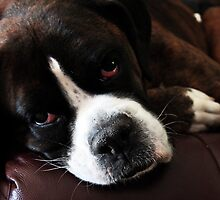 Arwen -Boxer Dogs Series- Update by Evita