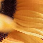 textured sunflower by Hege Nolan