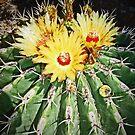 Barrel Cactus 2 © by jansnow