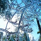 Ice Storm of 2008 by Julie Everhart