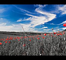 Blue Skys and Red Poppies III by Scott Anderson