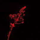 Glowing Red Flowers by Glenn Cecero