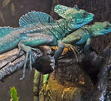 Male & Female Plumed Basilisk by Winston D. Munnings