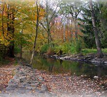 Petrifying Springs Park by kkphoto1