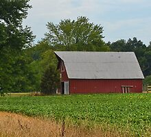 Red Barn and Beans by Sheryl Gerhard