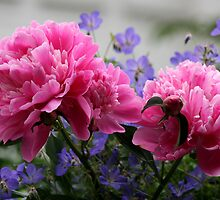 Peony - An omen of a Happy Marriage by Melodie Douglas