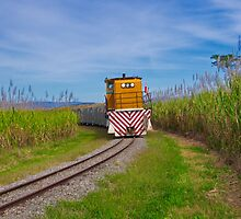 """""""Coming Through The Canefields"""" by Phil Thomson IPA"""