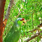 Parrot in Paradise © by jansnow