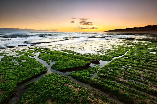 Green Sea Carpet by Sean Farrow