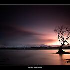 Lone Tree by JayDaley
