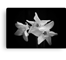 Daffodils in Black & White Canvas Print