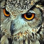 Indian eagle owl by Dale Batchelor