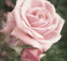 Pink Roses in Anzures 2 Nostalgic by Christopher Johnson