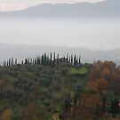Tuscan landscape at sunset by bertipictures