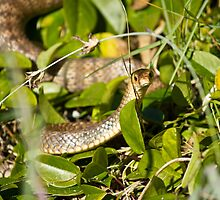 eastern brown snake by harper white