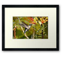 Hummingbird Dining Framed Print