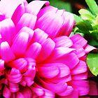 Pink Ribbon Flower by Vullix