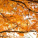 Orange Leaves at Mount Dandenong by Elana Bailey