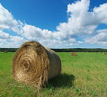 Hay Roll by Martins Blumbergs