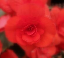 A Soft Touch Of Red by shelleybabe2