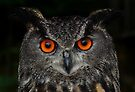 Eurasian Eagle-Owl by Jim Cumming