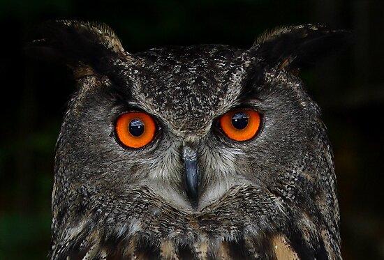Eurasian Eagle-Owl by Jim Cumming