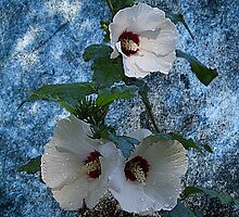Rose Of Sharon Grunge by Rick  Friedle