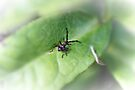 Tiny Insect by missmoneypenny