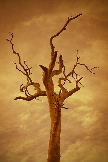 Autumn Dreams by Judith Cahill