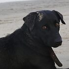 indian beach dog - black by rainbowvortex