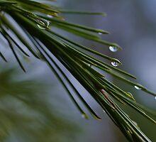 Rain Drops by Liz Worth