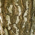 Bark (abstract) by Susan E. King