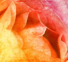 Rose couleur by AD-DESIGN
